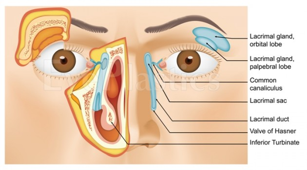 Tamara Fountain, MD | Blocked Tear Duct | nasolacrimal duct obstruction